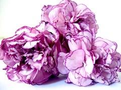 fleurs-gw02.jpg
