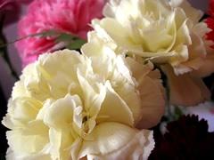 fleurs-gw03.jpg