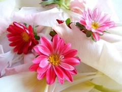 fleurs-gw04.jpg