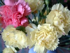 fleurs-gw05.jpg