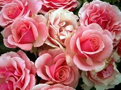 fleurs-gw06.jpg