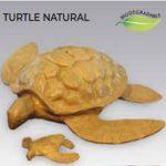 Tortue-500-1-1-e1594910851248.jpg